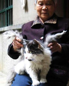 You've seen the chines winged cat by now. Srsly.