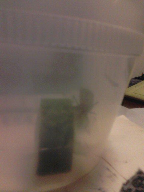 bug-and squash